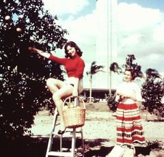 Citrus Tower Clermont FL (TresBohemes) Tags: florida citrus tower orange grove