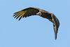 Vulture_Wingman (pxlsnfr) Tags: select vulture blackvulture prospectky inflight