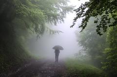 Fin (caramina) Tags: niebla mist bosque forest paraguas umbrella camino path
