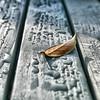 """Wherever I Fall"" (CJS*64) Tags: cjs64 craigsunter cjs panasonic panasoniclx100 lx100 garden flora colour drops raindrops leaf wet fallen"