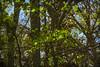 Colors Of A Seasonal Change (Modkuse) Tags: nature landscape nikon nikond700 nikondslr nikkor nikkorlens
