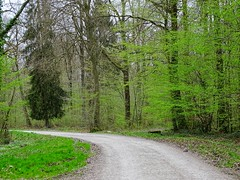 En forêt domaniale (voyageurrr) Tags: spring primavera printemps весна зелень природа лес дорога деревья sony shot view way chemin route path arboles natura nature greenery verdure arbres trees bois wood forest forêt