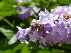 flowers (Jef Poskanzer) Tags: flowers tree geotagged geo:lat=3777140 geo:lon=12239647 t