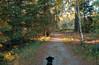 Cortana at Bear Head Lake State Park (Tony Webster) Tags: bearheadlakestatepark cortana ely minnesota dog hiking statepark trail unitedstates us