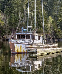 Old Fishboat (Paul Rioux) Tags: commercial fish boat vessel fishing wharf dock moored calm water reflection patina old vintage decayed decay worn weathered outdoors trees prioux