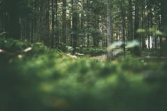 (a└3 X) Tags: natur nature alexander olympus sonne licht wald österreich neustift landscape outdoors color tree bäume wildlife