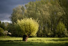 storm is coming (Rafael Zenon Wagner) Tags: spring frühling grün green grass baum tree storm sturm gewitter natur nature 58mm germany düsseldorf