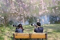 Looking at the same future (しまむー) Tags: fujifilm xe2 ebc fujinon 55mm f18 happy sakura hirosaki castle お花見 弘前城