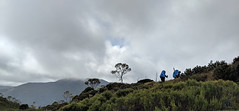 Day 3 Windermere to Pelion  (26) (MakeReel Martin Ryan) Tags: cradlemountains makereel martinryan overlandtrack tasmania trekking martinryanmakereelcom cradlemountain australia au