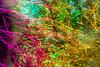 20180429-027 (sulamith.sallmann) Tags: landschaft pflanzen analogeffekt analogfilter ast blur botanik bunt bäume colorful effect effects effekt filter folie folientechnik forest landscape natur nature pflanze plants trees unscharf wald äste sulamithsallmann