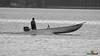 A-LUR_4807 (OrNeSsInA) Tags: trasimeno byrd passignano lago castiglionedellago perugia umbria toscana nature ornessina lucarosi