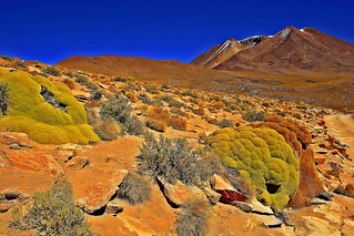 Yareta in Siloli Desert and Corina Mountain, Southwestern Bolivia