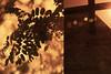 MMM Earthy Tones (Carrie McGann) Tags: hmmm mosaicmontagemonday montage mosaic earthytones flare sunflare lensflare architecture cross bokeh tree blossom purplerobelocust 050718 nikon nikond850 interesting