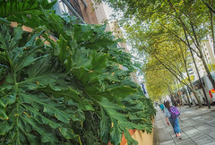 Strolling in the City (el-liza) Tags: citymay2018 nature outdoor outside plant leaves trees street city walking people cbd adelaide sa australia