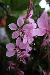 Flowers with wide angle lens (Hive Bee) Tags: macro macrophotography flowerpower flower flowers fiori garden gardendesign mygarden giardino