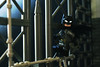 On Patrol... (Andrew Cookston) Tags: lego dc comics batman bruce wayne telltale krexcustoms dark blue macro toy custom minifig minifigure still life photography andrew cookston andrewcookston