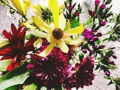 142/365/7 (f l a m i n g o) Tags: 365days project365 monday 2018 14th may bouquet flowers