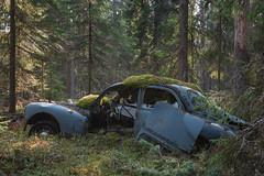 ot kuˈtyːʁ (mariburg) Tags: rotten marode forgotten ruin decay desolate derelict cars rustycars auto canoneos6d sigma35mm14dghsmart peugeot