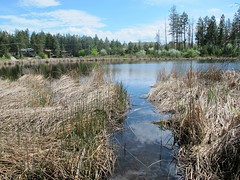 Anthropogenic disturbance (BC Wildlife Federation's WEP) Tags: peachland mapourmarshes wetland workshop rosevalley education citizenscience classification pwpa bcwf wep wetlandseducationprogram