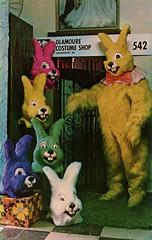 Glamoure Costume Shop, 1977 - Hammond, Indiana (Shook Photos) Tags: postcard postcards advertisingpostcard advertising advertise promotion glamourecostumeshop costumeshop bunny rabbit cavy bunnie hammondindiana hammond indiana lakecounty