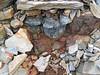 Pyrite atop chert nodule (Delaware Limestone, Middle Devonian; Emerald Parkway roadcut, Dublin, Ohio, USA) 5 (James St. John) Tags: delaware limestone devonian emerald parkway dublin ohio roadcut chert nodule nodules pyrite
