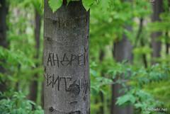 Ботанічний сад імені Гришка Буковий гай InterNetri  Ukraine 113