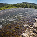 Wild and Scenic Sandy River