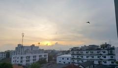 Early bird (Roving I) Tags: birds sunrise cloud architecture sky marigold hotels accommodation bangkok thailand travel tourism
