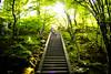 Forever young (Jojyakko-ji temple, Kyoto) (Marser) Tags: xt10 fujifilm raw lightroom japan kyoto sagano temple staircase sunlight verdantleaves kimono 京都 嵯峨野 常寂光寺 階段 着物