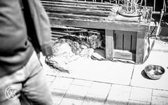 shadyRest.jpg (christophersears94) Tags: toronto urban roncesvalles street ronceydog dog tamron45f18vc canada canine canon6d ontario ronnyvillage ca