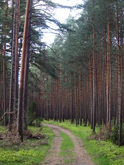11 (silvy-s) Tags: nature borytucholskie trees m43 epl1 forest