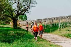 trail_delle_rocche_roero_2018_0379 (Ecomuseo delle Rocche del Roero) Tags: aprile ecomuseodellerocche edizione montà rocche trail uisp trailrunning roero