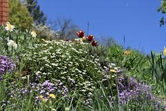 printemps (bulbocode909) Tags: valais suisse fleurs printemps vert bleu rouge jaune nature montagnes