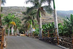 palms and bananas :) (green_lover (I wait for your COMMENTS!)) Tags: trees palms bananas road plantation tenerife canaryislands spain fence travels sign