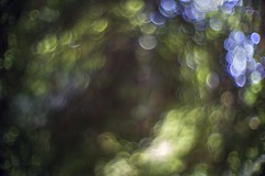 Wormhole to the past (PeterThoeny) Tags: saratoga california siliconvalley sanfranciscobay sanfranciscobayarea southbay hakonegardens japanesegarden garden park tree forest bubbles day dof depthoffield shallowdepthoffield bokeh sony a7 a7ii a7mii alpha7mii ilce7m2 fullframe vintagelens dreamlens canon50mmf095 canon 1xp raw photomatix hdr qualityhdr qualityhdrphotography abstract blur leaf fav100