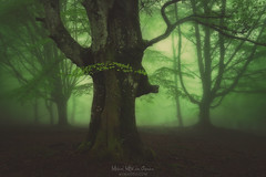 Back to the forest (Mimadeo) Tags: forest fog spring trees green wet foggy misty mist branch nature landscape morning leaves trunk light mystery mysterious fantasy fairy magic ethereal magical mystical gloomy unreal beautiful dreamy mood moody atmosphere atmospheric dark