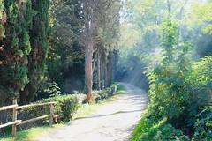 Morning light (halifaxlight) Tags: italy tuscany winery fence lightrays morning