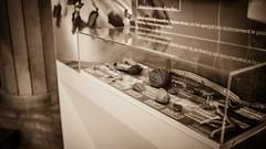Muséum national d'histoire naturelle (dirksachsenheimer) Tags: ausstellung d800 dirksachsenheimer fossilien jardindesplantes mineralien museum muséum muséumnationaldhistoirenaturelle naturkunde naturkundemuseum naturmuseum nikon paris präparaten sammlung urzeit exhibition histoire natural naturalhistorymuseum naturelle sigma50mmf14dghsmart sigma50mmf14 sigma 50mm f14 dg hsm art 14
