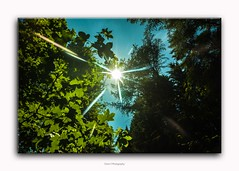 lens flares (friedrichfrank1966) Tags: nature naturephotography sunshine sonnenlicht light trees bokeh 1224 sigma nikon forest walk green äste scene mai scenery spring flickr sky himmel clouds wolken blau
