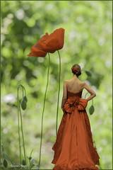 """Composizione con modella di """"Roma Spose"""" (ottobre 2014) e papaveri (adrianaaprati) Tags: caffarella fiori poppies nature green april red dress model mannequin bride show blur bokeh composition flowers fashion"""