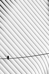 Alone (agnes.mezosi) Tags: birds bird minimalism minimalistic minimal blackandwhite lines lightsandshadows white
