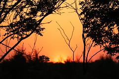 Burning sky (Sven Bonorden) Tags: sunset sonnenuntergang abend evening outdoor trees bäume orange silhouette waltrop ruhrgebiet leveringhausen burningsky