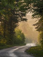 La route des sapins ***-- °---° (Titole) Tags: road routedessapins jura forest mist sunlight titole nicolefaton wet trees sunset forêtdelafresse fresse portedequevillon équevillon thechallengefactory storybookwinner challengegamewinner