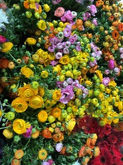So Many Decisions (Jill Clardy) Tags: flower mart market wholesale san francisco colorful blooms flowering blooming buds 365the2018edition 3652018 day132365 12may18 ranunculus ranunculi