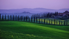 Tuscan Morning (south*swell) Tags: italy tuscany villedicorsano fields field scenery landscape cypress