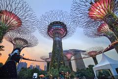 新城市乐园 (Kenny Teo (zoompict)) Tags: gardensbythebay singapore zoompict kenny canon