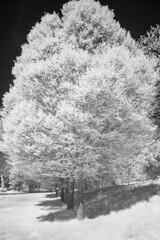 Mountsfield Park (blackwoodse6) Tags: catford london park trees nikon foilage infrared monochrome blackandwhite 850nm nikond70s southlondon southeastlondon mountsfieldpark londonboroughoflewisham londonparks se6