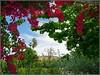 Seville (Spain) (sky_hlv) Tags: parque park parquedemarialuisa marialuisapark jardin jardines garden gardens sevilla seville andalucía andalusia españa spain europe europa city town primavera