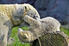 Nanook (Michael Döring) Tags: gelsenkirchen bismarck zoomerlebniswelt zoo eisbär polarbear iuvenil nanook tc14eii afs600mm40e d850 michaeldöring