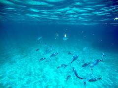GOPR8572 (urbanlifelens) Tags: mare sea seascape alghero alguer sardegna sardinia underwater fishes pesci seastar stellamarina coast costa sky cielo sun sole